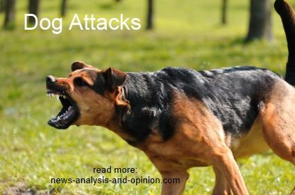 dog attack picture